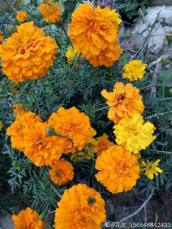 10月份开花的8种花,想下个月看开花的,不能错过