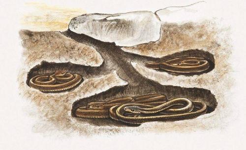 需要冬眠的动物——15种冬天冬眠的动物大盘点